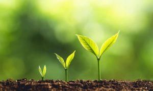nurturing employees ongoing background screening